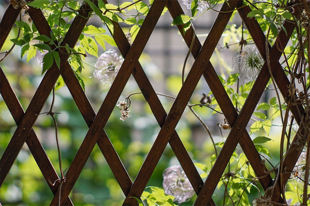Choosing The Right Trellis Panel For Your Garden A Mum Reviews