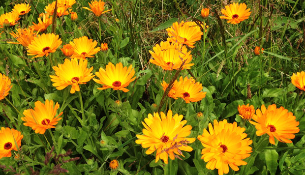A Day With Weleda And Their Beautiful Gardens - #WeledaInsight A Mum Reviews