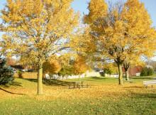 Autumn Outdoor Activities For Children A Mum Reviews