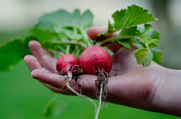 The Benefits of Growing Your Own Vegetable Garden A Mum Reviews
