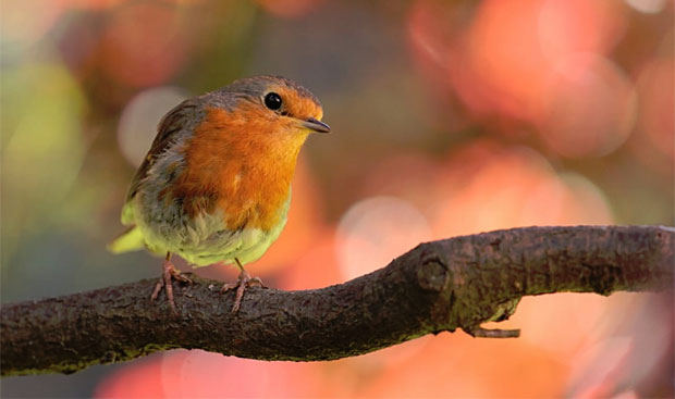 Caring for Wild Birds in Winter - The Do's and Don'ts A Mum Reviews