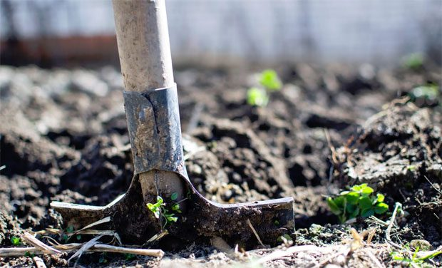 9 Tips to Master Low Maintenance Gardening A Mum Reviews