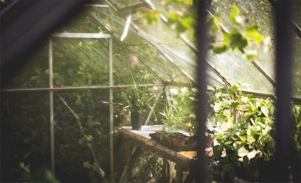 Plastic vs Glass Greenhouses – Which Should You Choose? A Mum Reviews
