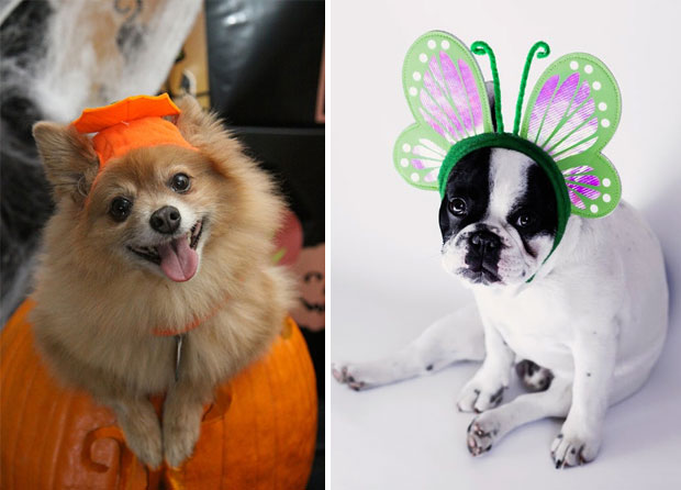 The Very Best Halloween Costumes for Your Dog This Year A Mum Reviews