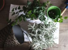 5 Tips for Gardening On A Budget A Mum Reviews