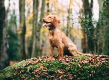 Choosing the Right Dog for Your Family A Mum Reviews