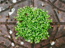 Creating A Beautiful Low-Maintenance Garden for Non-Gardeners A Mum Reviews