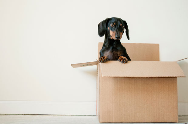 Rubbish Removal and Other Tips to Make Moving Day Go Smoothly A Mum Reviews