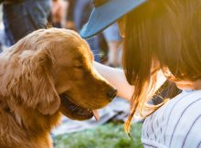 Things to Consider when Choosing a Family Pet A Mum Reviews