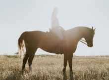 Horse Riding as a Child and as an Adult - My Experiences A Mum Reviews