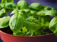 Grow Your Own Herb Garden - Planting, Caring and Harvesting A Mum Reviews