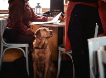 Dog Friendly Hotspots in the North East - Pubs, Restaurants, Inns A Mum Reviews
