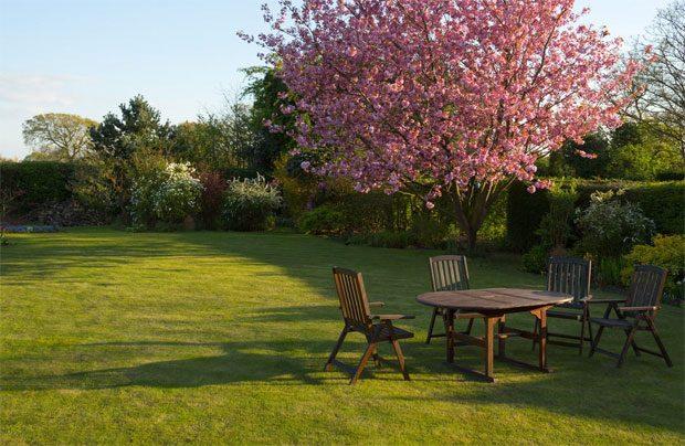 Low Maintenance Garden Tips A Mum Reviews