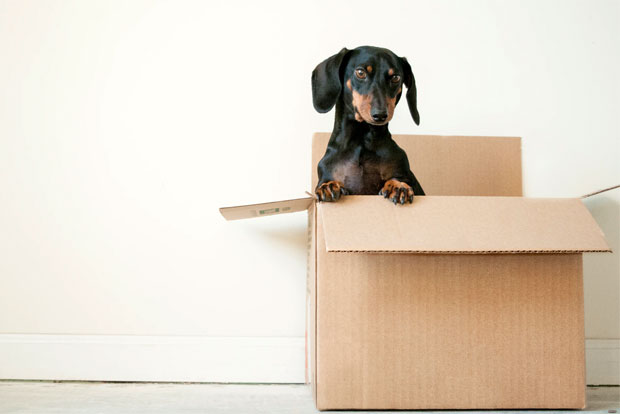 Make the International Removals from the USA to England Process Easier A Mum Reviews