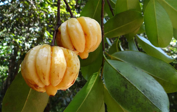 10 Facts About Garcinia Cambogia Every Health Enthusiast Should Know A Mum Reviews A Mum Reviews