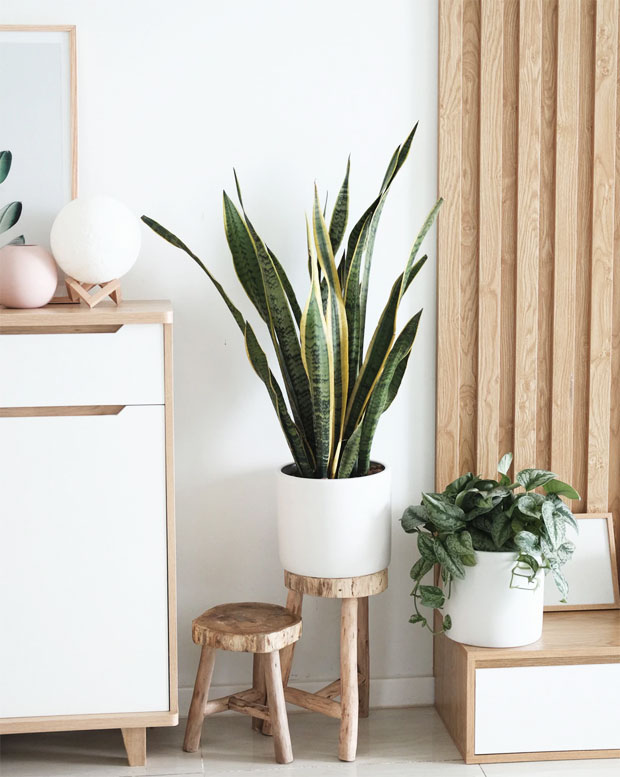 2020 Interior Design & Home Trends that Celebrate Nature A Mum Reviews