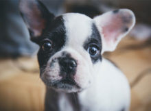 Puppy 101 A Primer for New Puppy Owners A Mum Reviews