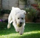 How to Landscape Your Dog-Friendly Garden? A Mum Reviews