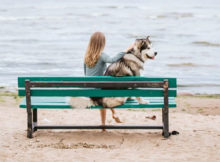 10 Tips for Traveling with Dogs A Mum Reviews