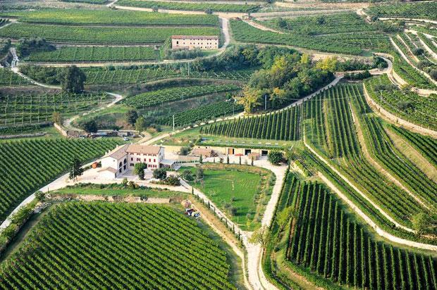 Amarone and Valpolicella wines