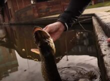 A Brief Introduction to Urban Pike Fishing