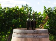 Everything You Need to Know About Natural Wines