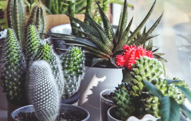 How to Grow a Garden Indoors