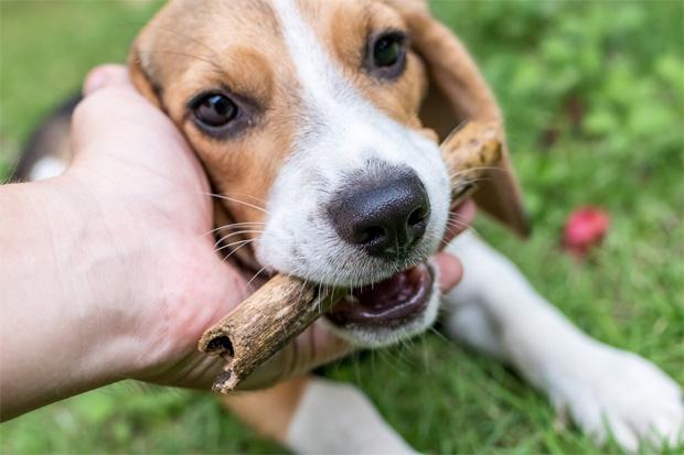 Top 5 Best Small Dog Breeds A Mum Reviews
